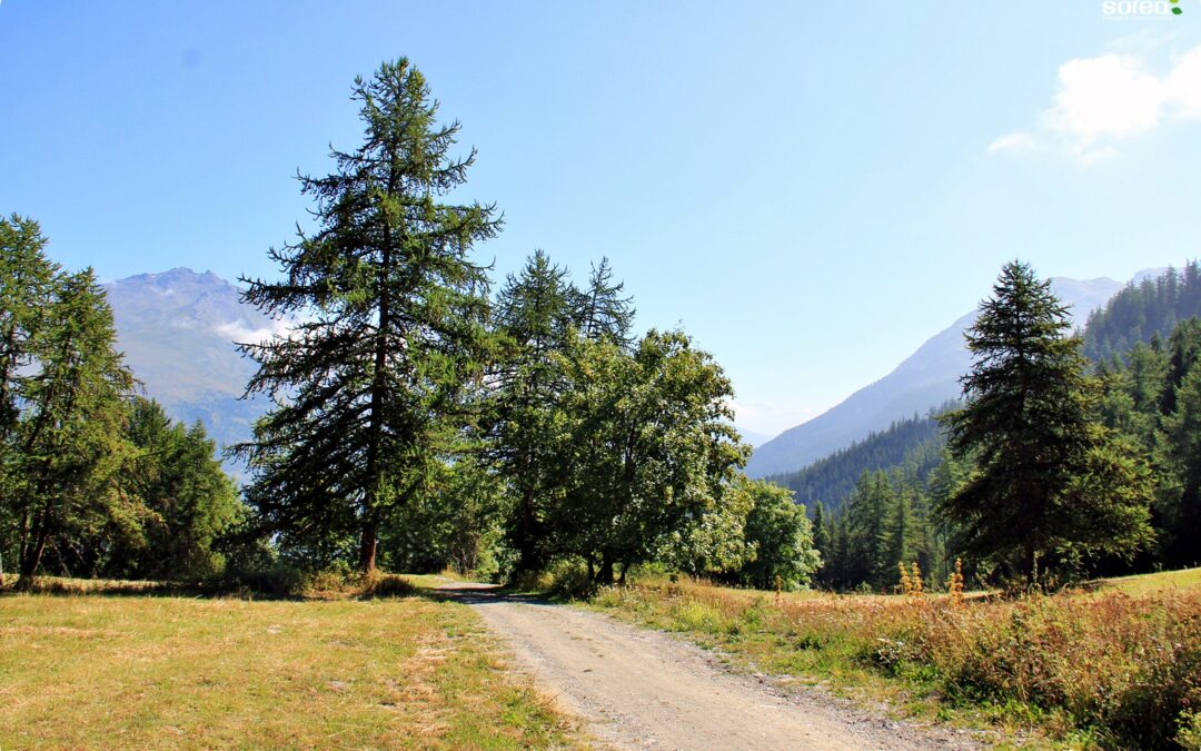 [Après travaux] Ligne HTA Valloire – Valmeinier, la piste forestière est un billard