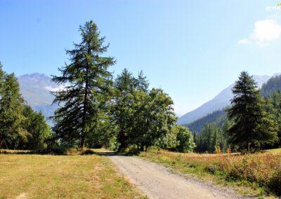 La piste forestière vue depuis les 3 croix