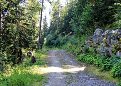 Piste forestière Valloire-Valmeinier après les travaux de liaison HTA